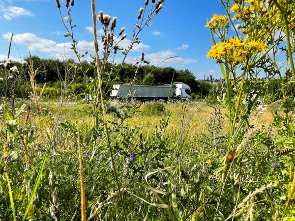 biodiesel lastbil