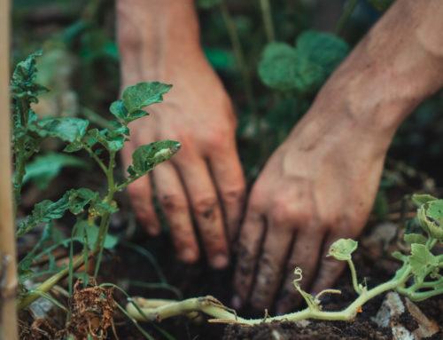 Upprepning bidrar ibland till förståelse – Ta del i Earth Day 2021 virtuellt
